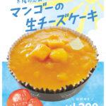 太陽の恵み マンゴーの生チーズケーキ